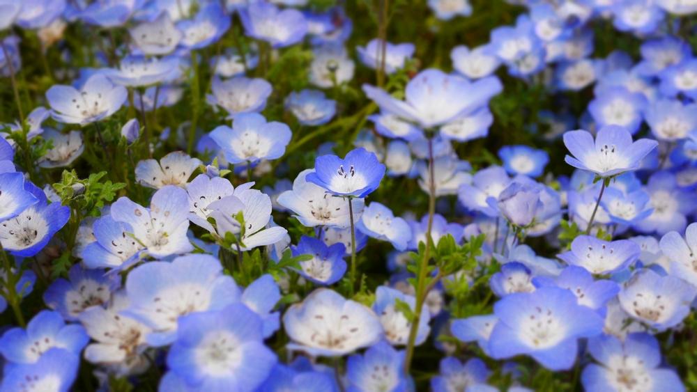実は微妙に青の色合いが異なる個体もあります。