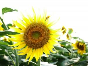 訪問時には、清瀬市のホームページを確認して開花の様子を確認してくださいね。