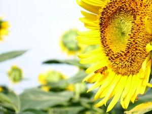 こっちのミツバチも、たくさん花粉を抱えていますね。