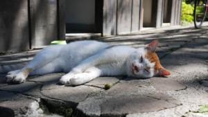 おまけ。巾着田に向かう道すがらで見かけた猫さん。撮影当日は台風一過で35℃前後まで気温が上昇。猫も暑いよね(笑