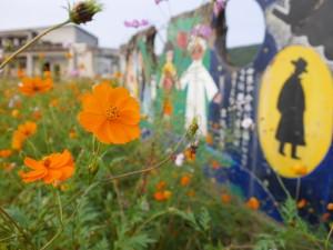 子どもたちの描いた壁絵の前には、鮮やかなコスモスが咲いていました。