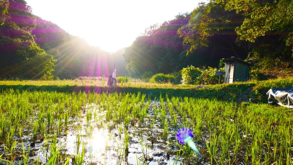日本の原風景のひとつです。