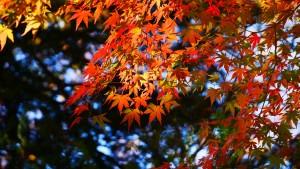 高尾山にて撮影。