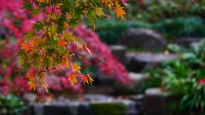 向山庭園にて撮影。