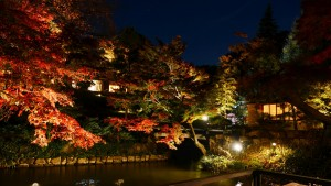 向山庭園にて撮影。紅葉の時期にはライトアップされ夜間も公開されます。