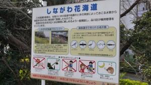 しながわ花海道は、地元の方々のお力で維持されているようです。