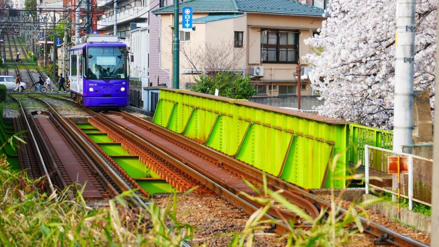 都電と桜。早稲田付近で撮影。