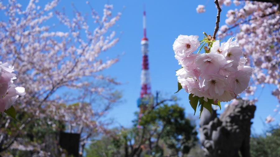東京タワーは、やはりフォトジェニックです。