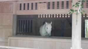 伊勢神宮外宮にいらっしゃった神馬。目が可愛いです。