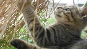 田代島に向かう、本土側の船着き場にいた子猫。