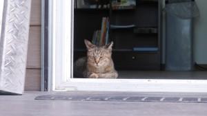 田代島に向かう、本土側の船着き場にいた猫。
