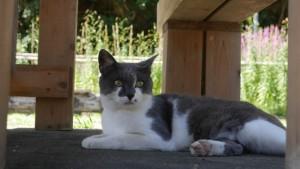 島内の猫は、なぜかこの子のような鼻の脇にほくろがある子が多いです。