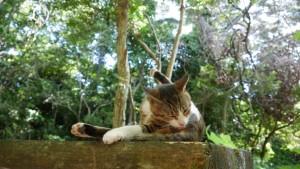 男子の大事なところを、念入りにナメナメする猫(笑