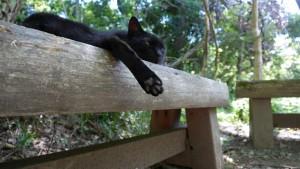 黒猫は、肉球も黒いです。
