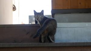 島の駅、にゃんこ共和国にいた猫。