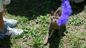 「その猫じゃらしは、渡さん!!」