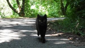 人を見るや、駆け寄ってくる黒猫。ピントが合いません!