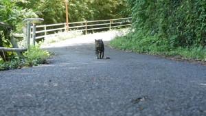 道を歩いていると、普通に猫とすれ違います。