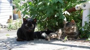 4匹の猫がいますよ。