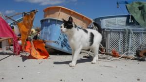 漁具を嗅ぎ回る猫。