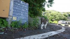 どうやら、田代島の猫たちは、結構な距離を移動しているようです。