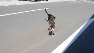 僕らが、かっぱえびせんを開封した音を聞きつけて、駆け寄ってくる猫たち。禁止されていても、食べ物をあげてしまう観光客はいるのでしょうね。