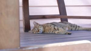 田代島に向かう、本土側の船着き場にいた猫。気持ちよさそうにくつろいでいます。