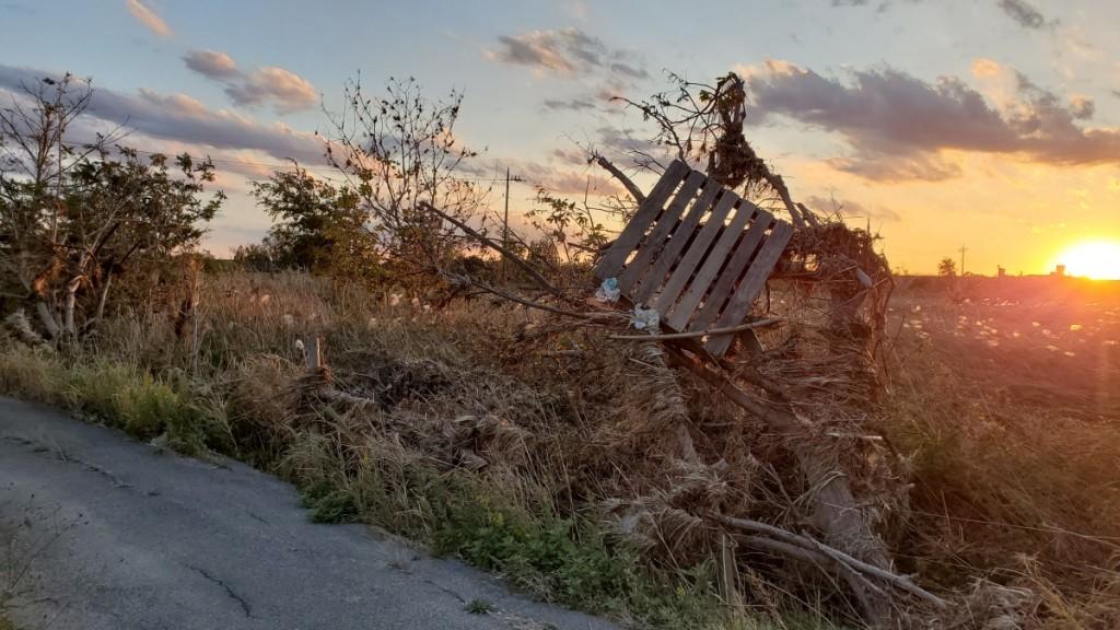 台風19号の後、荒川河川敷で見た風景です。流されてきたパレットが悲しげでした。