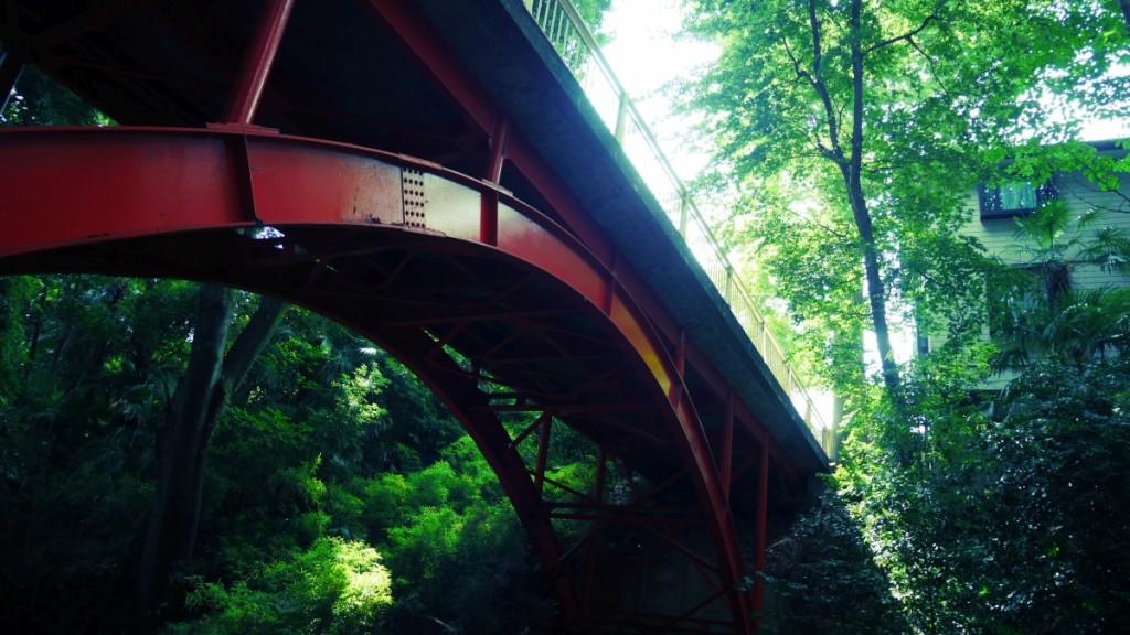 等々力渓谷の陸橋。初夏の青葉が鮮やかでした。